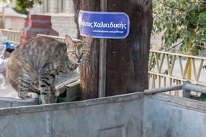 Straßenkatze auf einem Müllcontainer
