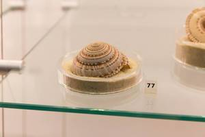 Sundial shell