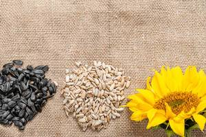 Sunflower seed kernels and whole seeds with sunflower flower on burlap background (Flip 2019)