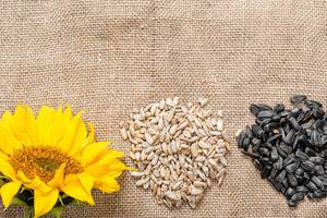 Sunflower seed kernels and whole seeds with sunflower flower on burlap background