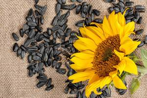 Sunflower seeds and sunflower on burlap