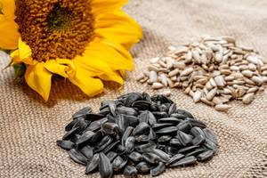 Sunflower seeds peeled and in-shell with a fresh sunflower on burlap (Flip 2019)