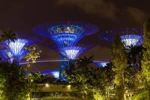 Supertree Groves at Night