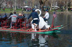 Swan Boats (Schwanenboote) in Boston Public Garden