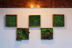 Symmetrische Pflanzenrahmen hängen an einer weißen Wand