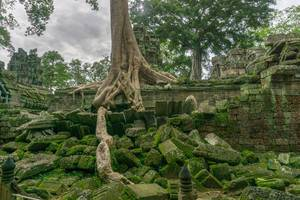 Ta Phrom Temple Ruin in Angkor Thom Complex in Siem Reap