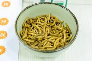 Tasting plates with worms offered by Jimini