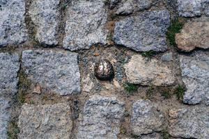 The 3 SEC Bronze Brain fine art object next to Einstein tower