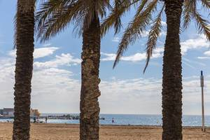 Three palm trees at Platja del Somorrostro Beach in front of the Mediterranean coast of the holiday destination Barcelona, Spain