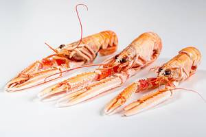 Three whole boiled lobsters on a white background