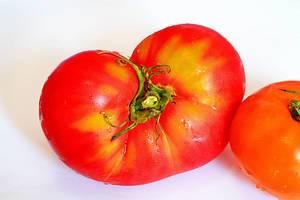 "Tomate ""Bullish Herz"""