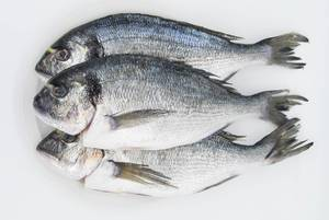 Top view of gilthead seabreams on white background