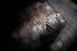 Toter Fisch auf einem Holztisch