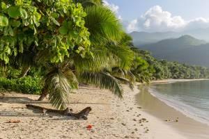 Treibgut unter einer Palmenbaum am weißen Sandstrand Port Glaud auf der Tropeninsel Mahé, Seychellen