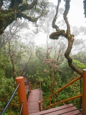Treppenhaus in den Tropen