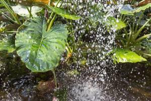 Tropische Pflanzen unter einem kleinen Wasserfall im Schmetterlinghaus in Wien