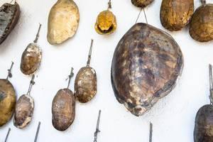 Turtle shells hanging on wall