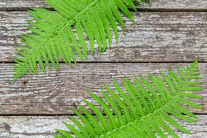 Two fern leaves on a grey wooden background