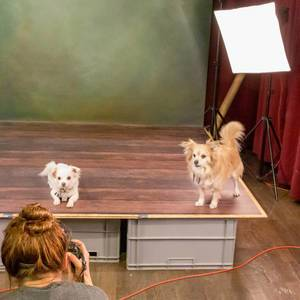 "Two little dogs during a photo shoot in front of the photographer on the set at the dog fair ""Hundemesse 2019"" in Cologne, Germany"