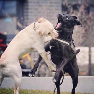 Unser lieber Tollwuthund. ;-) #instadog #instapic #fun #bestfriends #laboftheday #animals #no #puppy #pack #rudel #picoftheday #doglover #dogstagram #dogs_of_instagram