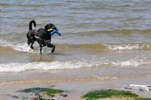 Urlaub mit dem Hund in der Niederlande