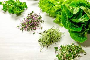 Various green fresh lettuce and micro greens on white wooden background (Flip 2019)