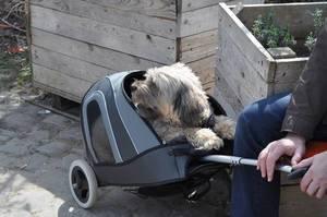 Verbotener Hund auf Street Food Festival Köln