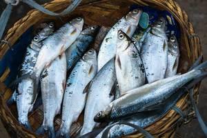 Verkauf von frischem Fang auf dem Fischmarkt von Bacolod