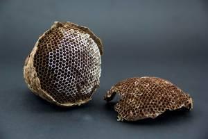 Verlassenes, teilweise zerstörtes Bienennest mit sichtbaren Bienenwaben vor dunklem Hintergrund