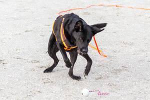 Verspielter Hund am Strand fängt einen Ball im Sand
