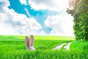 Versteckter Osterhase im tiefen Gras bei schönem Wetter