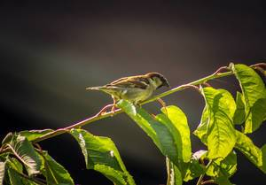 View of sparrow sitting on tree branch