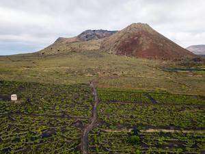 Vinery fields beneath sleeping volcano Monte Corona
