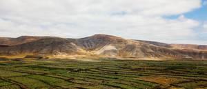 Vinery fields of Canary Islands / Weinfelder von Kanarischen Inseln