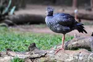 Vogel in Parque das Aves (Vogelpark) in Brasilien