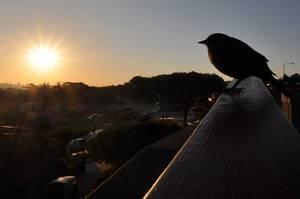 Vogel während des Sonnenaufgangs / Bird enjoys sunrise