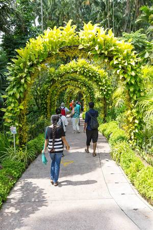 Walking Path in Botanic Garden Singapore