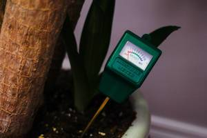 Wassergehaltsmesser in der Erde einer Topfpflanze