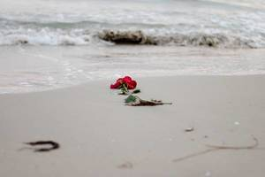 Waves washing away a red rose from the beach.