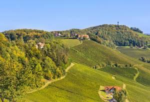 Weinbau in Slovenien