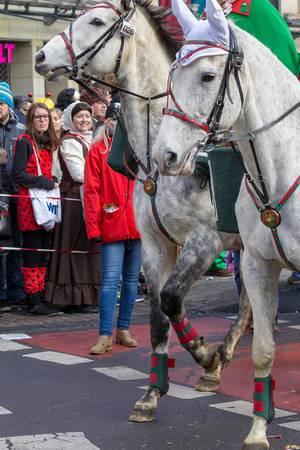 Weiße Pferde beim Rosenmontagszug - Kölner Karneval 2018