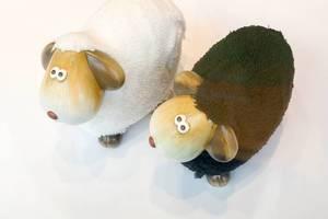 Weißes und schwarzes Schaf