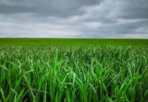 Weites Feld mit grünem Gras und bewölktem Himmel