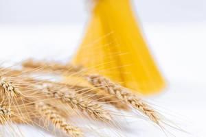 Weizenähren vor Bund Spaghetti mit Schärfentiefe vor weißem Hintergrund