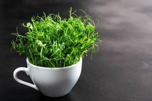 White Cup with the green shoots of peas on a black background