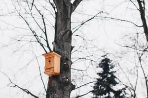 Wooden bird house on a tree. Winter season.