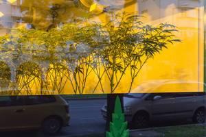 Wunderbaum Expert cannabis dispensary in Vienna