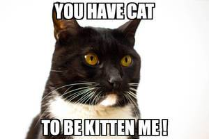You have cat to be kitten me!