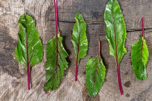 Young fresh beet leaves on wooden background. Top view (Flip 2019)