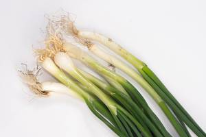 Young Onions on the white background